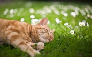 cat-sleeping-in-the-grass-750x469